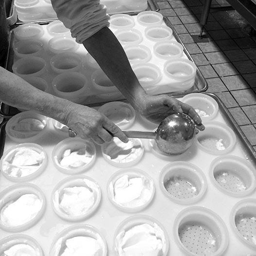 Histoire Atelier de la Sèvre - Histoire Sèvre & Belle - Moulage à la louche - Terroir - Fromages au lait cru - Atelier de la Sèvre - Sèvre & Belle
